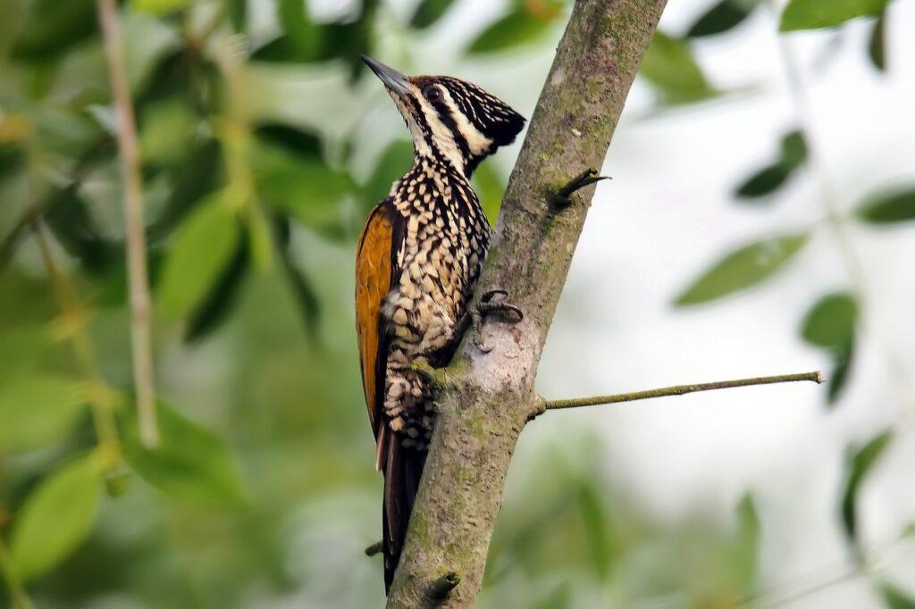 flame back woodpecker female 4556048 1280 1024x682 1 - Essas árvores possuem o dom de atrair pássaros