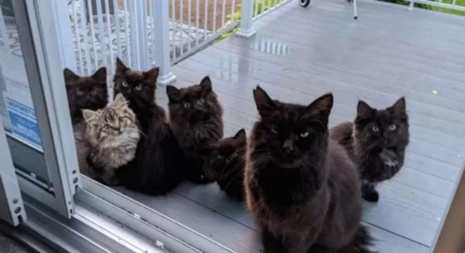 gato filhotes gata - Gata foge e volta com seis bebês para que mulher ajude a cuidar