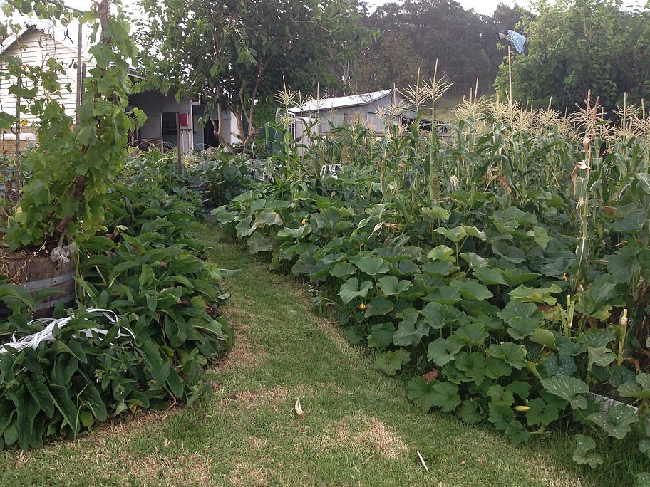 limestone - Australianos produzem alimentos sem agrotóxicos para até 50 famílias em apenas 4 mil m²
