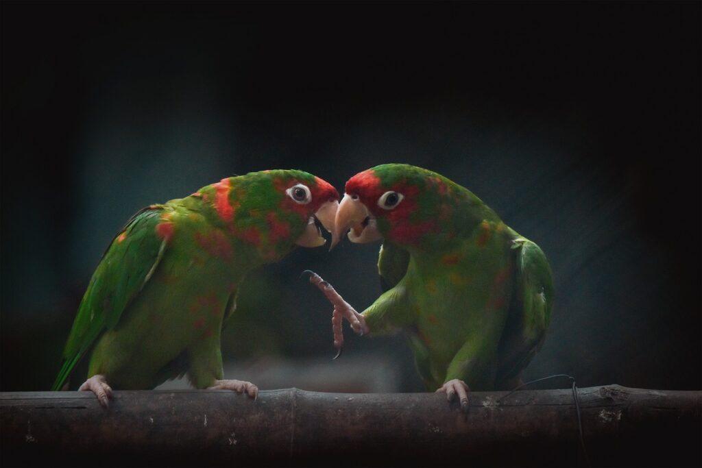 parakeets 5697749 1280 1024x683 1 - Essas árvores possuem o dom de atrair pássaros