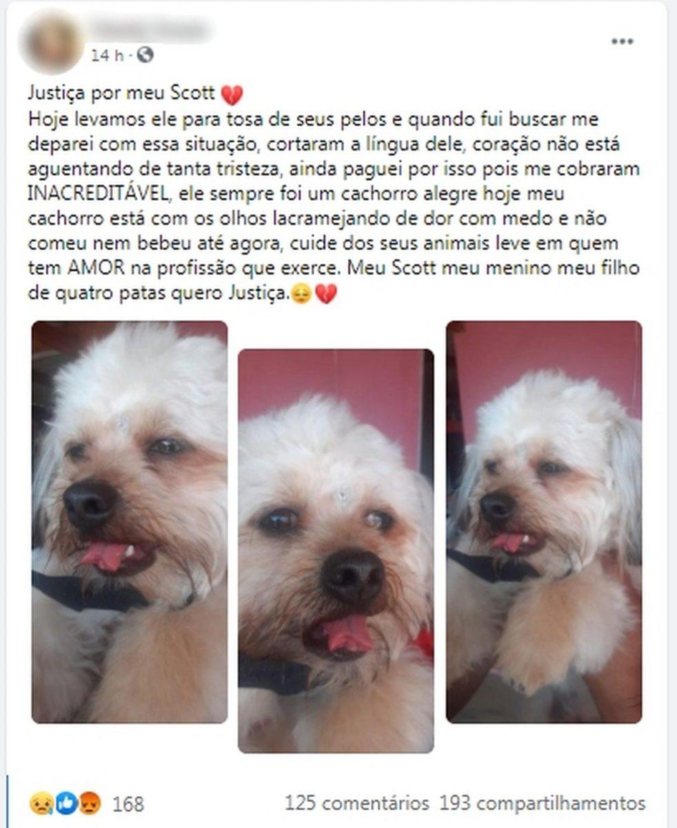 publicacao1 scaled - Mulher faz boletim após seu cão retornar de tosa com língua cortada em Quatá