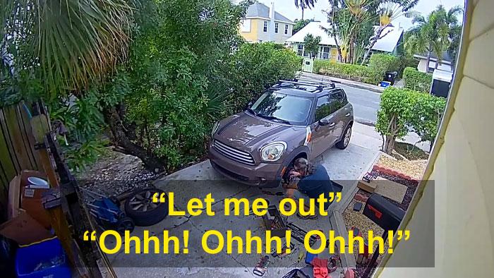 neighbor calls police screaming parrot 1 5e182dc8aafee 700 - Homem recebe 4 policiais em sua casa porque seu papagaio gritava para deixá-lo sair