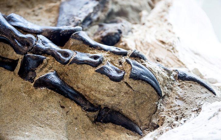 Captura de Pantalla 2020 11 20 a las 12.09.17 1 - Descoberto o primeiro esqueleto completo do Tiranossauro Rex da história. Teve um duelo mortal