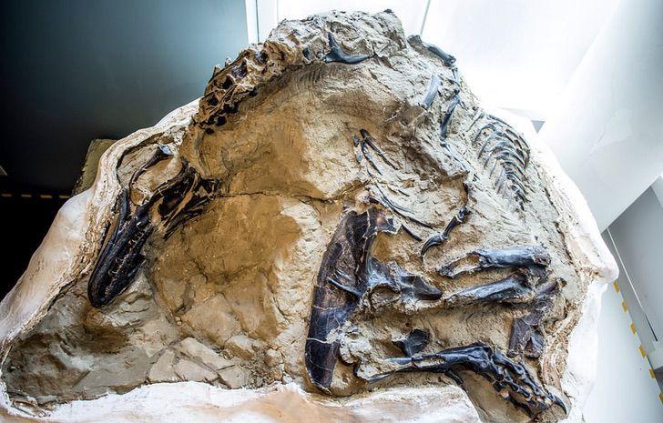 Captura de Pantalla 2020 11 20 a las 12.09.51 - Descoberto o primeiro esqueleto completo do Tiranossauro Rex da história. Teve um duelo mortal