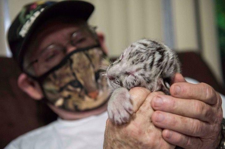 Captura de Pantalla 2021 01 15 a las 13.05.08 - Snow, a ameaçada tigresa branca da Nicarágua, faleceu. Viveu menos de 15 dias