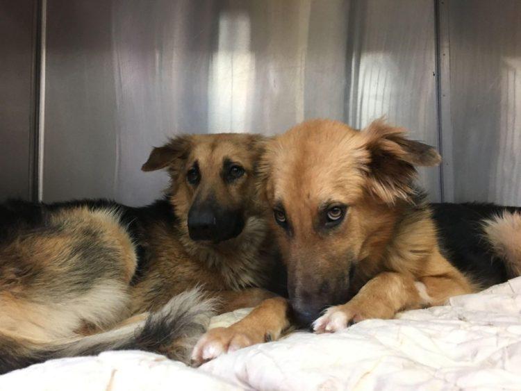 abrazados 1 750x563 1 - Cães abandonados apavorados não param de se abraçar ao perceber que seu destino é a morte certa