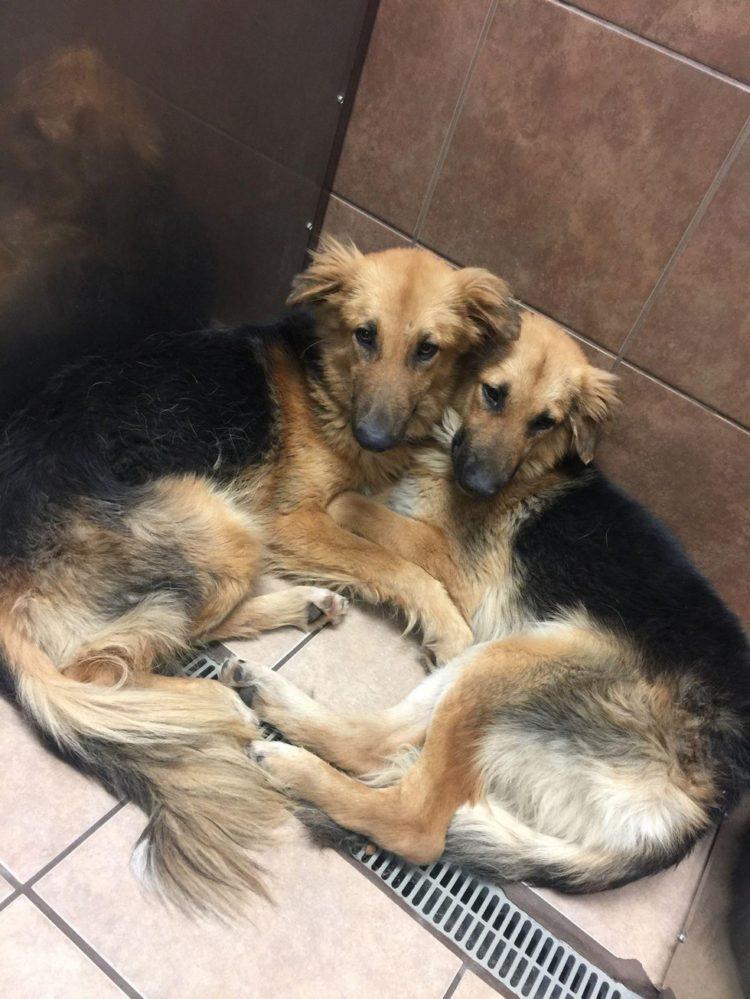 abrazados 2 750x999 1 - Cães abandonados apavorados não param de se abraçar ao perceber que seu destino é a morte certa