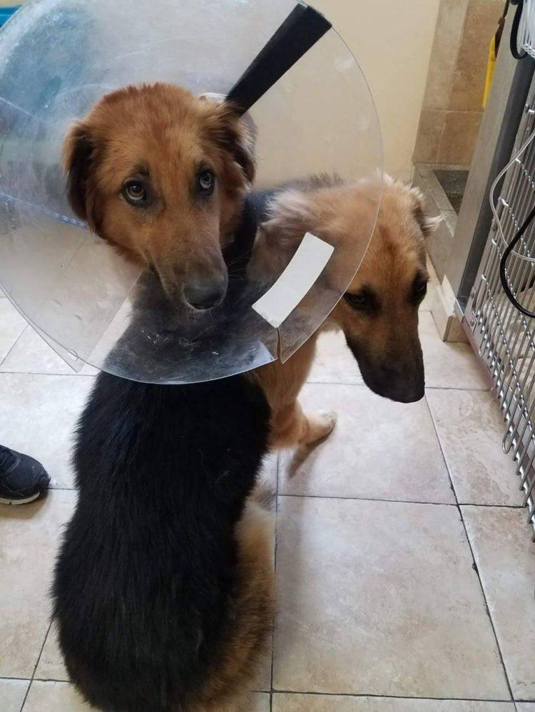 abrazados 3 750x999 1 - Cães abandonados apavorados não param de se abraçar ao perceber que seu destino é a morte certa