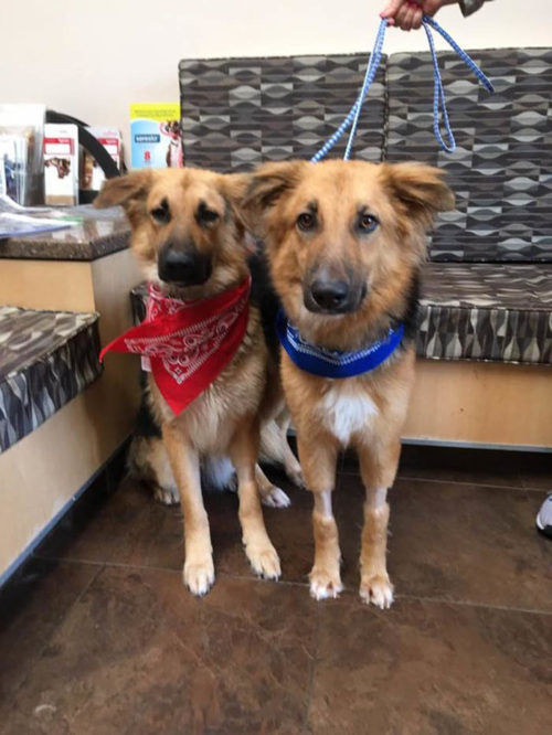 ellos encontraron un hogar para siempre y juntos 500x666 1 - Cães abandonados apavorados não param de se abraçar ao perceber que seu destino é a morte certa