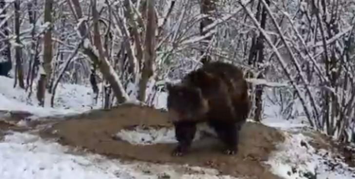 oso 1 - Uma gaiola imaginária: urso vive circulando após 20 anos trancado em um zoológico
