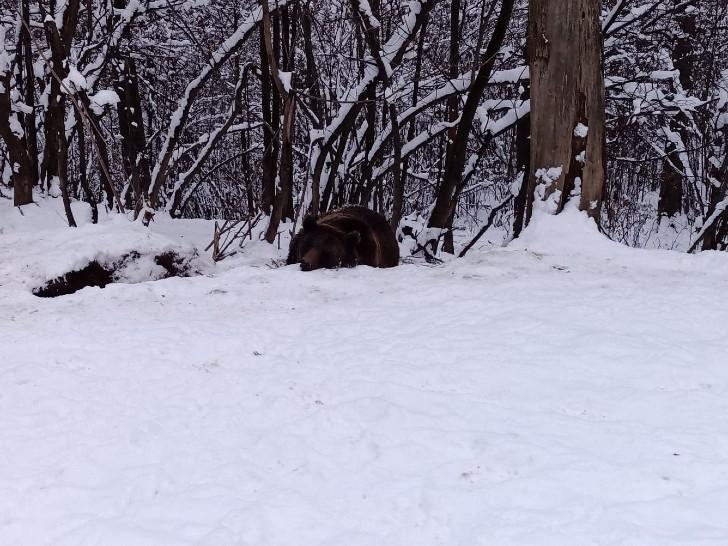oso 2 - Uma gaiola imaginária: urso vive circulando após 20 anos trancado em um zoológico