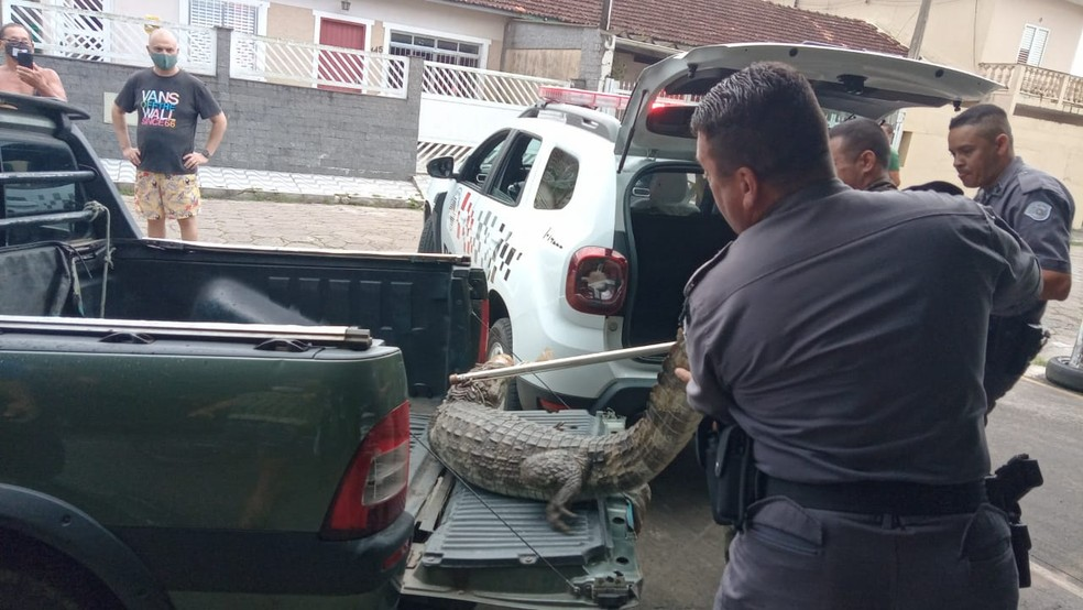 whatsapp image 2021 01 24 at 19.49.10 1 - Jacaré chega a 1 metro de morador de rua que dormia em estacionamento e mobiliza a PM; VÍDEO