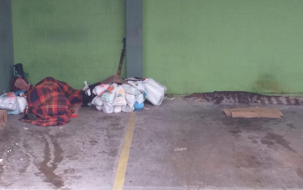 whatsapp image 2021 01 24 at 19.49.12 - Jacaré chega a 1 metro de morador de rua que dormia em estacionamento e mobiliza a PM; VÍDEO