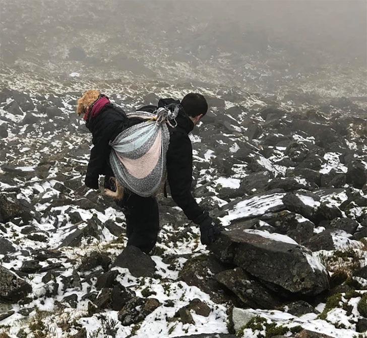 perro rescatado montaña0000 - Cachorrinha é carregada por mais de 10km quando a viram perdida em 'Não podíamos deixá-la sozinha'
