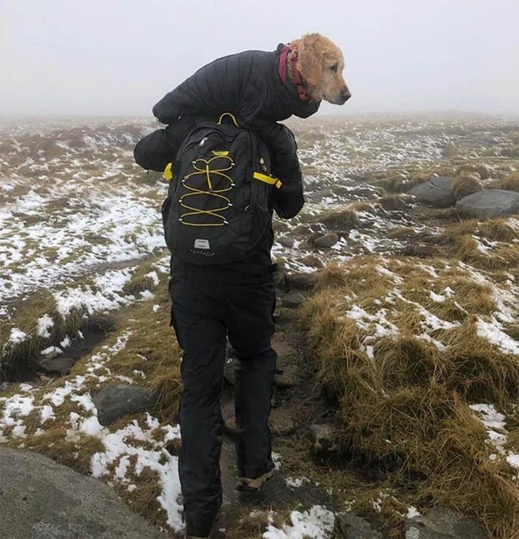 perro rescatado montaña0006 - Cachorrinha é carregada por mais de 10km quando a viram perdida em 'Não podíamos deixá-la sozinha'