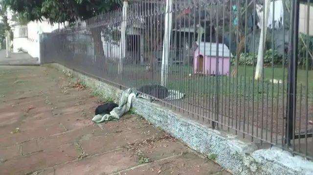 puppy sees homeless dog brings over a blanket to make sure hes not cold 6 - Cachorro que tem lar divide seu pequeno cobertor com cãozinho abandonado