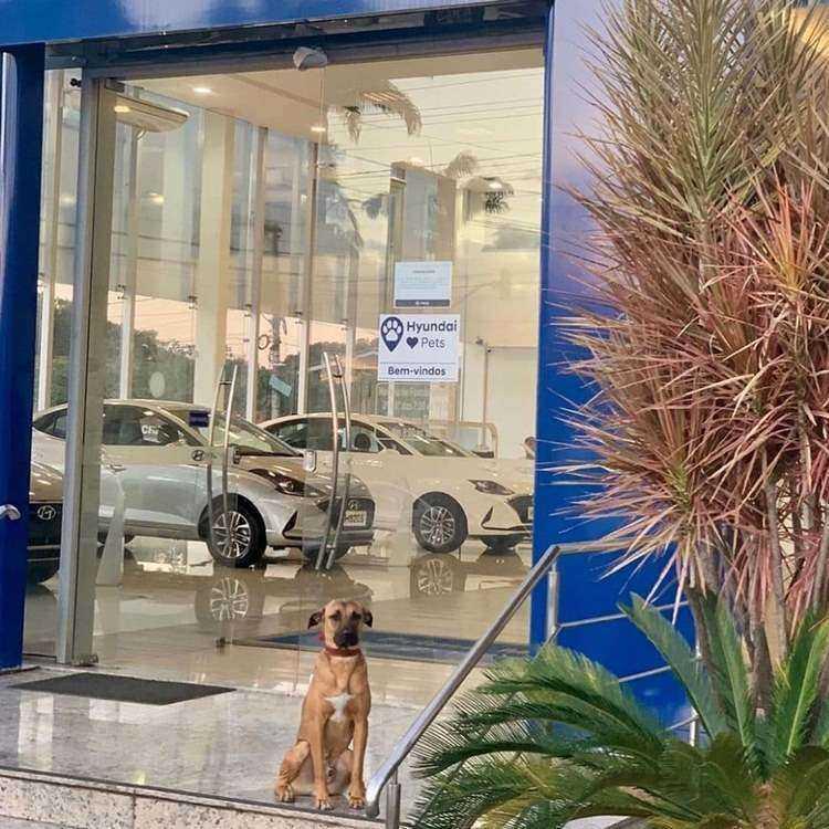"""1 214 - Cachorro abandonado vira """"cão-sultor"""" em concessionária e iniciativa faz grande sucesso"""