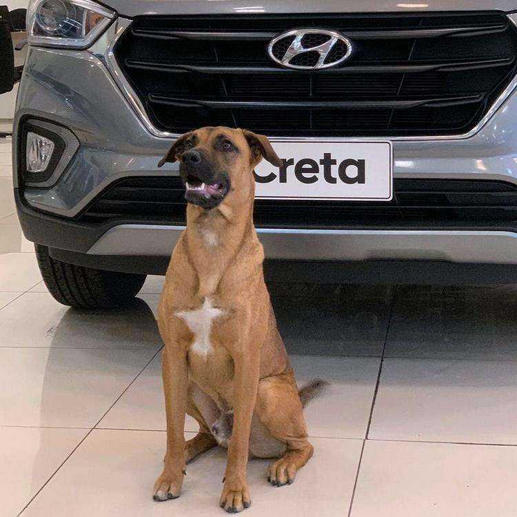 """3 188 - Cachorro abandonado vira """"cão-sultor"""" em concessionária e iniciativa faz grande sucesso"""