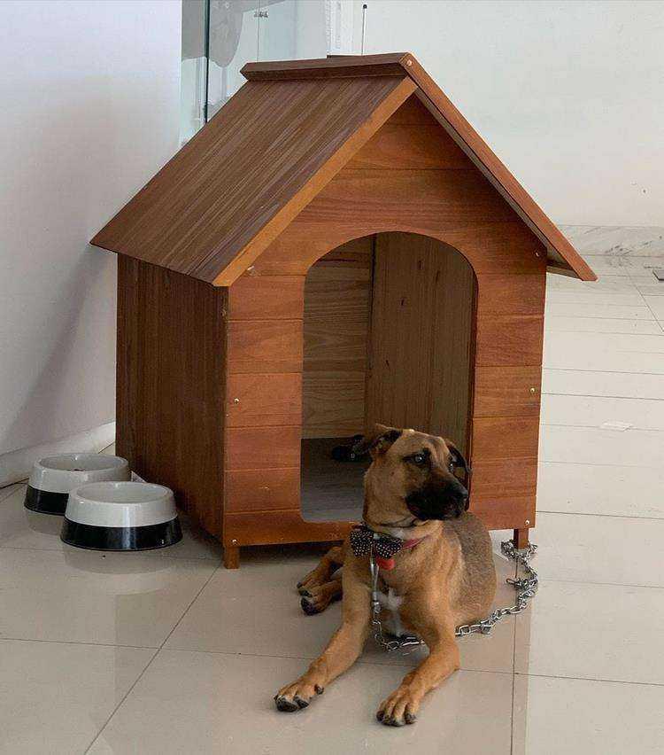 """4 178 - Cachorro abandonado vira """"cão-sultor"""" em concessionária e iniciativa faz grande sucesso"""