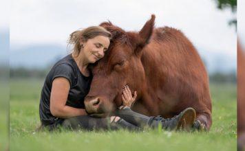 55 vaca salvar comprar ternero matadero toro bebe gigante 356x220 - Inicio