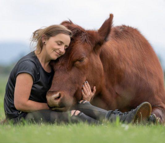 55 vaca salvar comprar ternero matadero toro bebe gigante 534x462 - Inicio