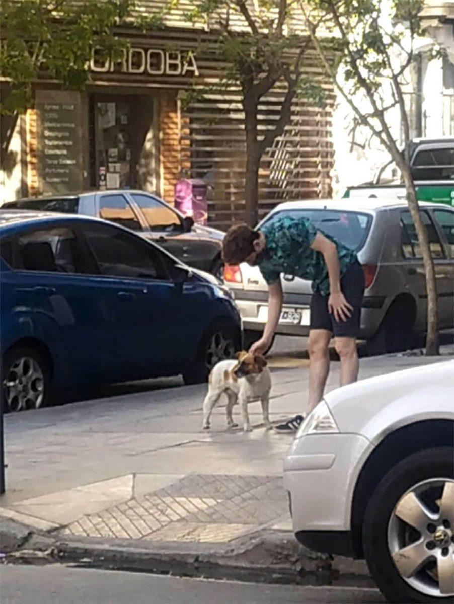 Perro llevo rescatistas scaled - Cachorrinho abandonado leva os resgatadores a uma placa afixada na porta de um prédio