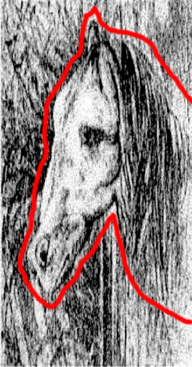 consegue identificar o cavalo certo - 99% das pessoas não consegue ver o cavalo em menos de um minuto