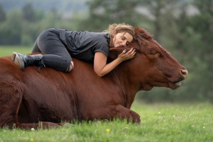 vaca salvar comprar ternero matadero toro bebe gigante0001 - Ela salvou bezerro de ser levado para o matadouro e agora tem um grande touro de estimação