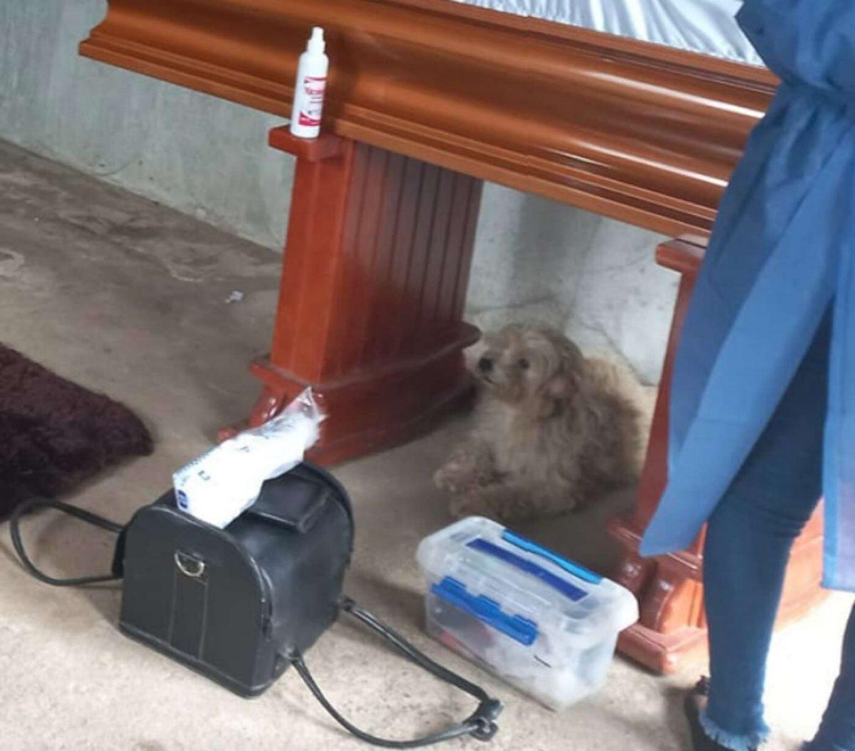 1 1 scaled - Cãozinho fiel insiste em ficar ao lado de sua dona até o fim, inclusive durante seu funeral