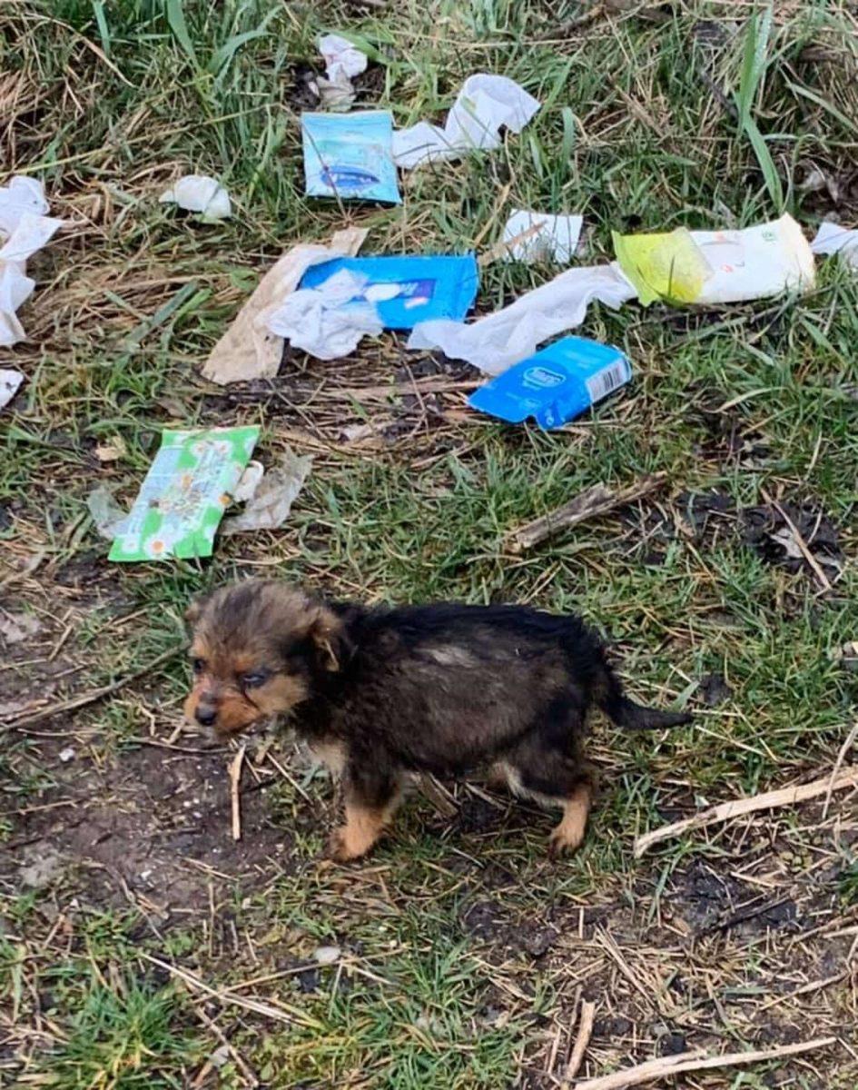 1 scaled - Rapaz encontra cachorrinha filhote usando sapato como abrigo contra o frio e decide adotá-la