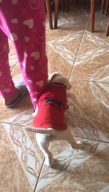 1630504887 612f87b74dfa2 hd - Em vídeo fofo, cachorrinho que mordeu dona recebe 'bronca' de mamãe cadela