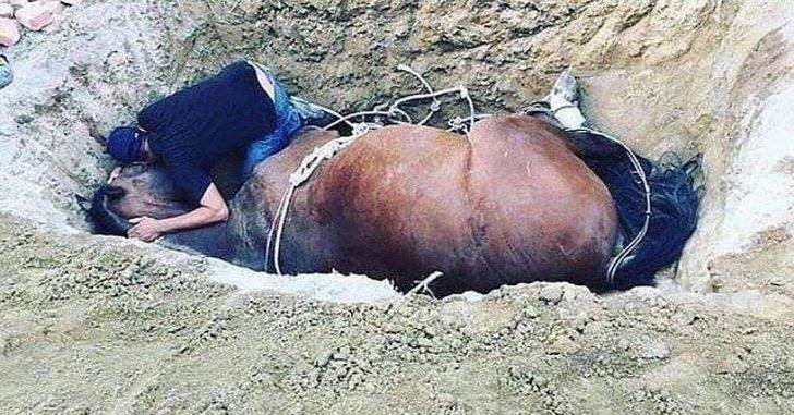 2 16 - Em luto, jovem chora ao lado de seu fiel amigo que faleceu - um cavalo de estimação