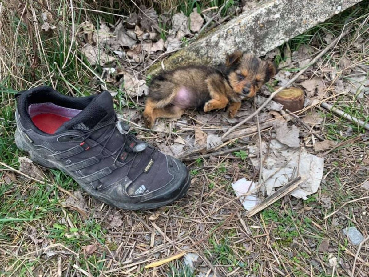 4 scaled - Rapaz encontra cachorrinha filhote usando sapato como abrigo contra o frio e decide adotá-la
