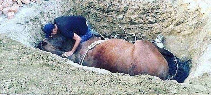 hombre aferra caballo - Em luto, jovem chora ao lado de seu fiel amigo que faleceu - um cavalo de estimação