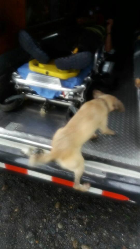 perro dueno calle2 - Cadela arrisca a própria vida em rua movimentada para pedir ajuda ao seu dono ferido