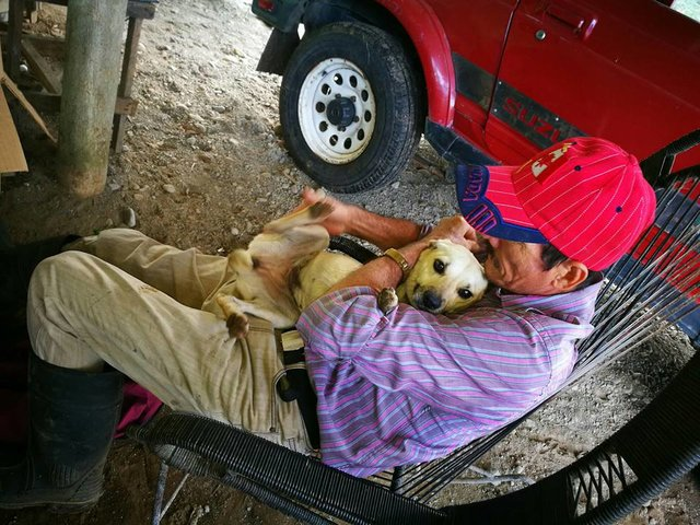 perro dueno calle4 - Cadela arrisca a própria vida em rua movimentada para pedir ajuda ao seu dono ferido