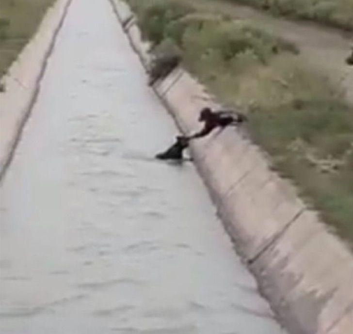 salvalo pipo salvalo joven grabo tenso rescate perrito zanjon 1 - Jovem resgata cachorrinho que caiu em vala durante forte chuva na Argentina [VIDEO]